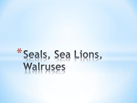 "* Means ""fin-footed mammals"" * 3 families: * Odobenidae * Walruses! * Otariidae * The ""eared seals"" * Sea lions * Fur seals * Phocidae * True seal (earless."