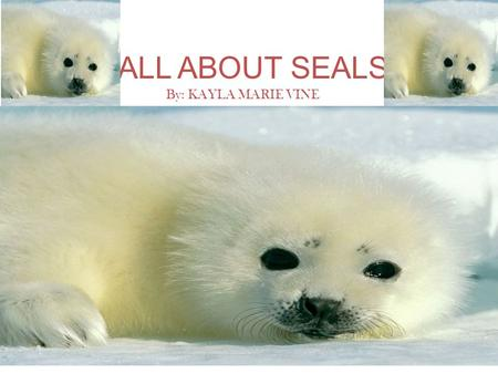 ALL ABOUT SEALS By: KAYLA MARIE VINE.