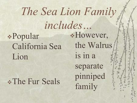 The Sea Lion Family includes…  Popular California Sea Lion  The Fur Seals 1  However, the Walrus is in a separate pinniped family.