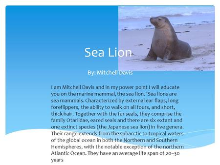 Sea Lion By: Mitchell Davis I am Mitchell Davis and in my power point I will educate you on the marine mammal, the sea lion. 'Sea lions are sea mammals.
