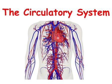 The Circulatory System. The Anatomy of the Circulatory System The circulatory system includes: -Heart -Blood vessels (arteries, veins, capillaries) -Blood.
