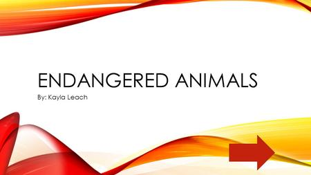 ENDANGERED ANIMALS By: Kayla Leach. TeacherStudent Please Click the bubble that applies to you.