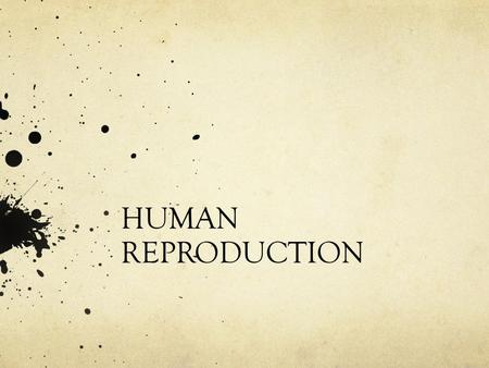 HUMAN REPRODUCTION. THE MALE REPRODUCTIVE SYSTEM.