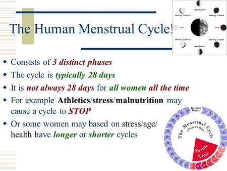 The Human Menstrual Cycle!  Consists of 3 distinct phases  The cycle is typically 28 days  It is not always 28 days for all women all the time  For.