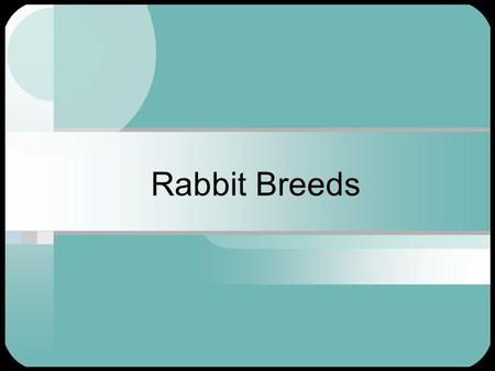 Rabbit Breeds. American Chinchilla Great for Meat Very Popular Great Pets Docile nature Need to be protected from cold, drafts, wind, snow and rain.