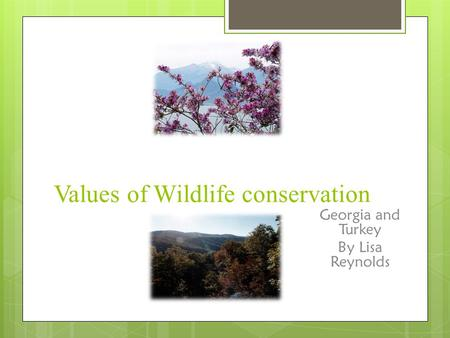 Values of Wildlife conservation Georgia and Turkey By Lisa Reynolds.