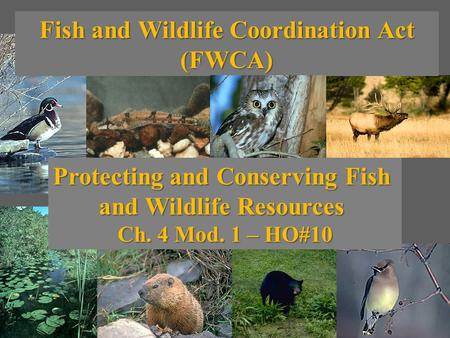 Fish and Wildlife Coordination Act (FWCA) Protecting and Conserving Fish and Wildlife Resources Ch. 4 Mod. 1 – HO#10.