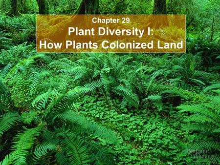Chapter 29 Plant Diversity I: How Plants Colonized Land.