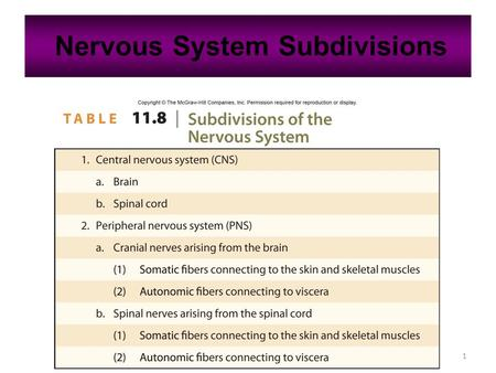 1 Nervous System Subdivisions. 2 11.6: Peripheral Nervous System Cranial nerves arising from the brain Somatic fibers connecting to the skin and skeletal.