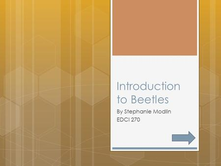 Introduction to Beetles By Stephanie Modlin EDCI 270.