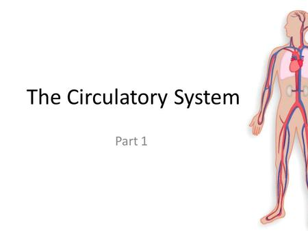 The Circulatory System Part 1. Learning Objectives Learn about what blood cells are and what they do. Learn about the different types of blood vessels.
