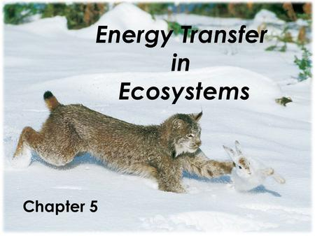 Energy Transfer in Ecosystems