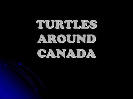 TURTLES AROUND CANADA All images and web pages herein are © David Scarbrough and Design, Ltd. Email us if you have any questions!Design, Ltd ail us Visitor.