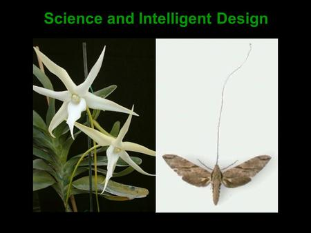 Science and Intelligent Design. 1.Introduction This presentation describes: 1.the logic of science in relation to ontology (i.e. the study of reality),