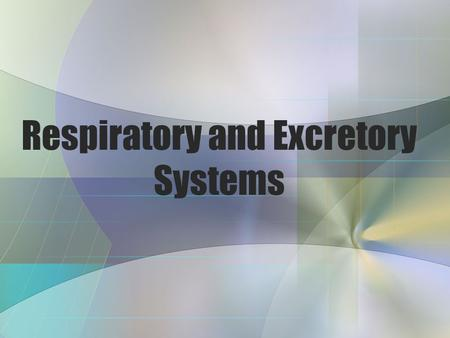 Respiratory and Excretory Systems Vocabulary Alveoli – Air Sacs that make up the lungs, where gas exchange occurs Capillary – tiny blood vessels that.