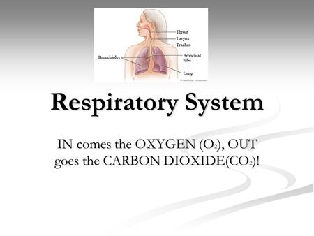 Respiratory System IN comes the OXYGEN (O 2 ), OUT goes the CARBON DIOXIDE(CO 2 )!