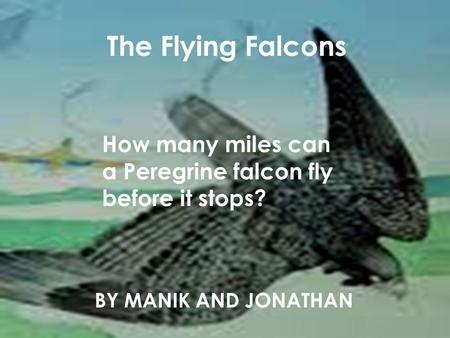 The Flying Falcons BY MANIK AND JONATHAN How many miles can a Peregrine falcon fly before it stops?
