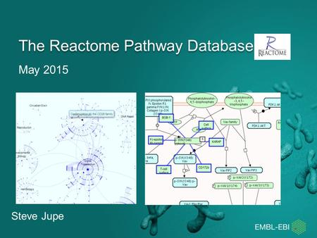 May 2015 The Reactome Pathway Database Steve Jupe.