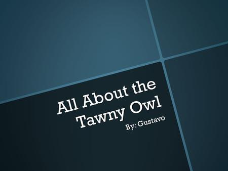 All About the Tawny Owl By: Gustavo. Appearance  The tawny owl is a tytonidae  The color of a tawny owl is brown, white, and grey.  It has black color.