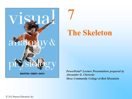 © 2011 Pearson Education, Inc. PowerPoint ® Lecture Presentations prepared by Alexander G. Cheroske Mesa Community College at Red Mountain 7 The Skeleton.