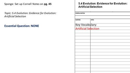Sponge: Set up Cornell Notes on pg. 45 Topic: 5.4 Evolution: Evidence for Evolution: Artificial Selection Essential Question: NONE 5.4 Evolution: Evidence.