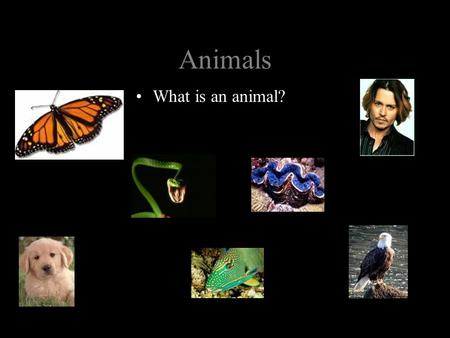 Animals What is an animal?.