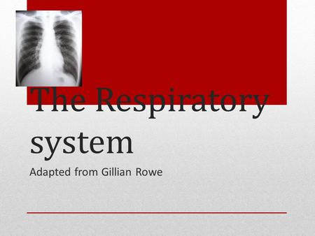 The Respiratory system Adapted from Gillian Rowe.
