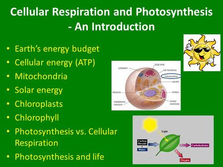 Cellular Respiration and Photosynthesis - An Introduction