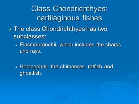 Class Chondrichthyes: cartilaginous fishes  The class Chondrichthyes has two subclasses: Elasmobranchii, which includes the sharks and rays. Elasmobranchii,