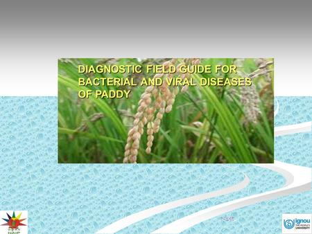 DIAGNOSTIC FIELD GUIDE FOR BACTERIAL AND VIRAL DISEASES OF PADDY Next.