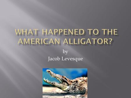 By Jacob Levesque.  Yes, the American alligator is indeed still living.