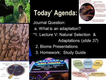 Today' Agenda: Journal Question: a. What is an adaptation? *1. Lecture V: Natural Selection & Adaptations (slide 37) 2. Biome Presentations 3. Homework: