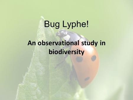 Bug Lyphe! An observational study in biodiversity.
