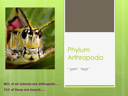 "Phylum Arthropoda "" joint"" ""foot"" 80% of all animals are arthropods….."