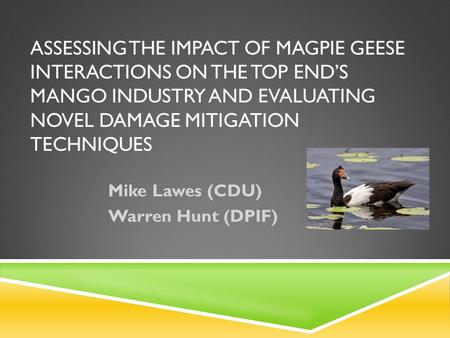 ASSESSING THE IMPACT OF MAGPIE GEESE INTERACTIONS ON THE TOP END'S MANGO INDUSTRY AND EVALUATING NOVEL DAMAGE MITIGATION TECHNIQUES Mike Lawes (CDU) Warren.