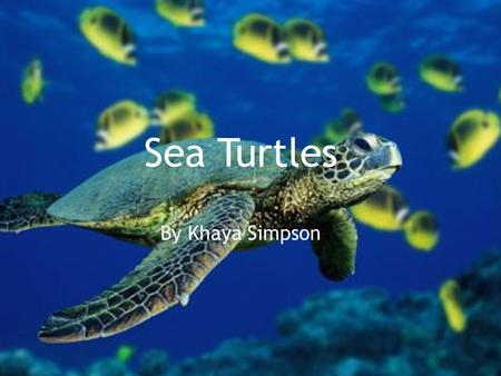 Sea Turtles By Khaya Simpson. This powerpoint presentation is about sea turtles and why they are endangered and what you can do to help if you want to.
