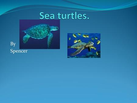 By Spencer. Endangered. Unfortanly sea turtles are endangered. This is why they die quickly. People like there shell.