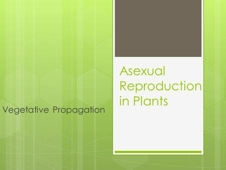 Asexual Reproduction in Plants Vegetative Propagation.