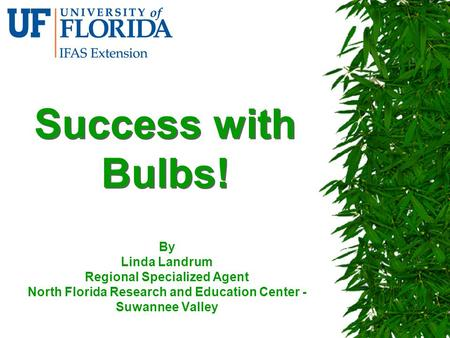 Success with Bulbs! By Linda Landrum Regional Specialized Agent North Florida Research and Education Center - Suwannee Valley.