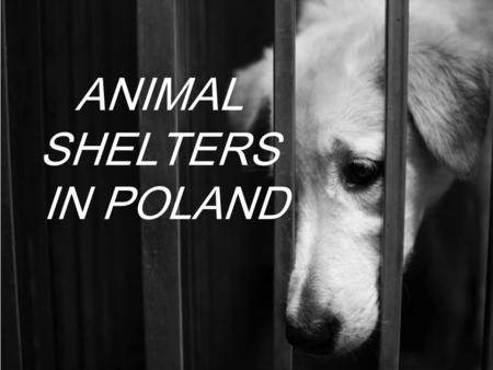 ANIMAL SHELTERS IN POLAND. General information - 2013 Veterinarian received reports about one hundred seventy-four (174) animal shelters, of which seventy-five.