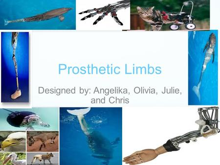 Prosthetic Limbs Designed by: Angelika, Olivia, Julie, and Chris.