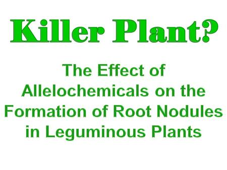 Does alfalfa- leaf extract, an allelochemical, affect the formation of root nodules of leguminous plants?