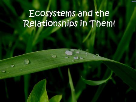Ecosystems and the Relationships in Them!