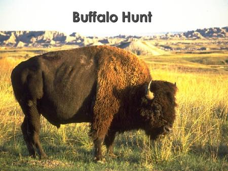 Buffalo Hunt Word Knowledge Grade 5, Unit 5 - Lesson 2 Line 1: night knight plains planes tale tail Line 2: buffalo deer bison elk fish Line 3: stretch.