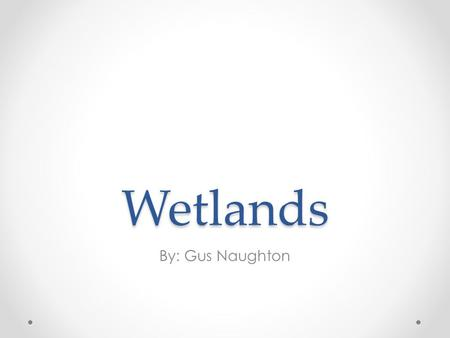 Wetlands By: Gus Naughton.