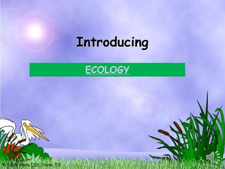 © 2004 Plano ISD, Plano, TX Introducing ECOLOGY. © 2004 Plano ISD, Plano, TX Today: You will explore the diverse relationships within an ecosystem. You.