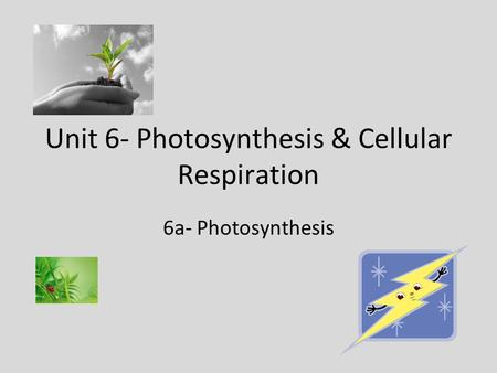 Unit 6- Photosynthesis & Cellular Respiration 6a- Photosynthesis.