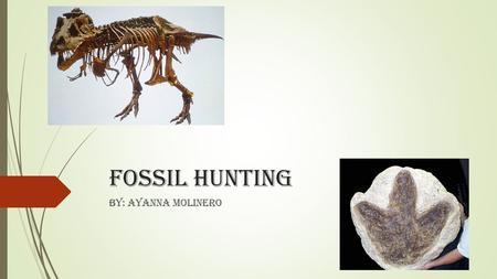 Fossil Hunting BY: Ayanna Molinero. About this power point  We have been reading about fossil hunters and searching for fossils. These are some of the.