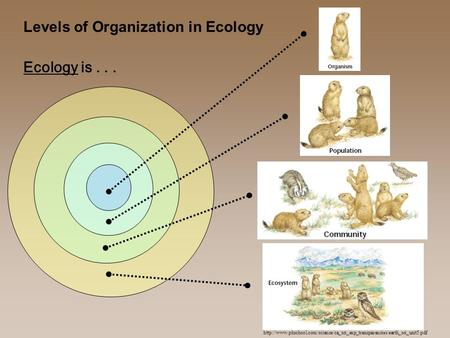 Levels of Organization in Ecology  Ecology is...