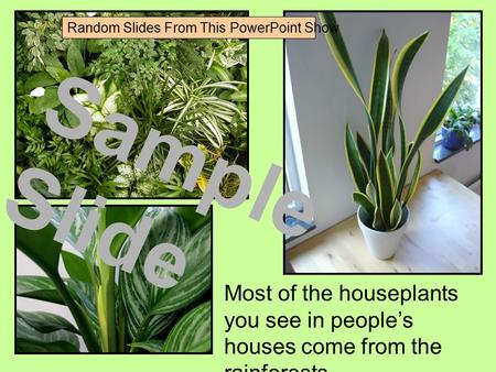 Most of the houseplants you see in people's houses come from the rainforests. Sample Slide Random Slides From This PowerPoint Show.